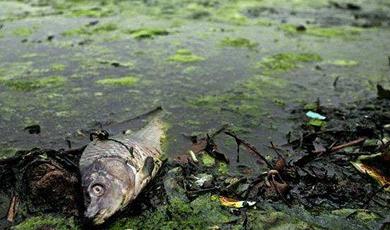 水的富营养化的危害